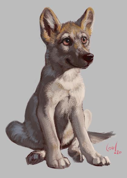 Puppy by thassy