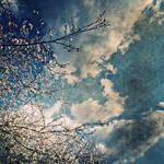 karcicekleri by Sinan34