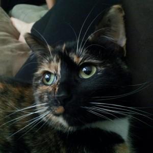 catsunderstars's Profile Picture