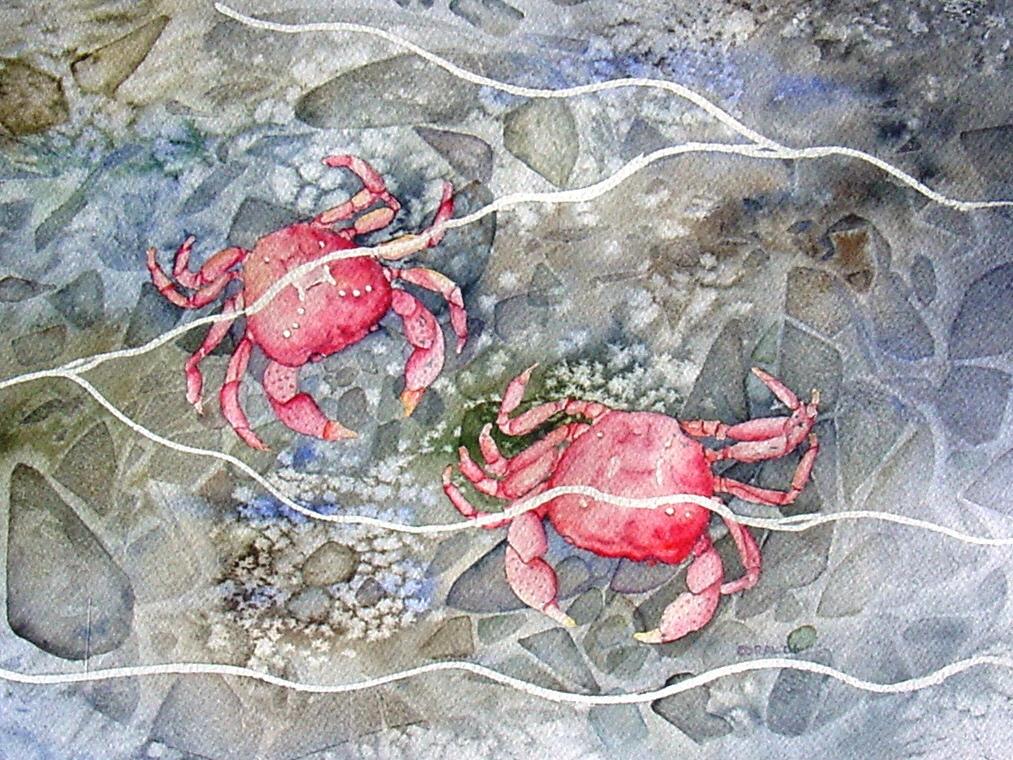 Shore Crabs by bluecnidaria