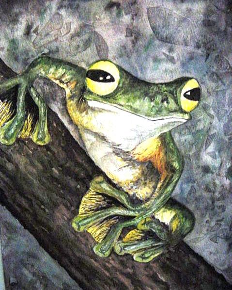 Frog by bluecnidaria