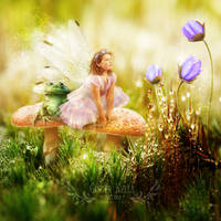 The Toadstool Faerie