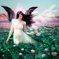 The Lotus Faerie