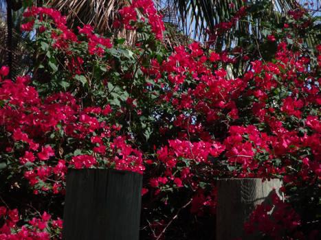 Flowers on the Island