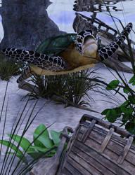 Sea Turtle by Sirius1066