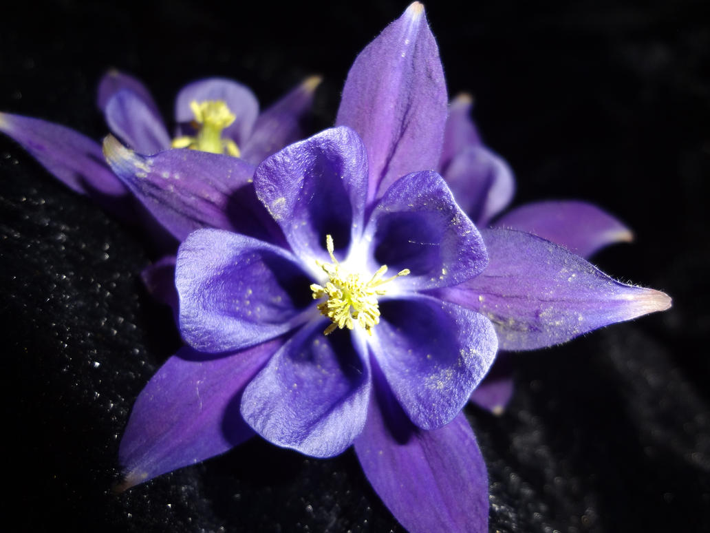 One More Purple Star Flower By Moonlitsnowwolf On Deviantart