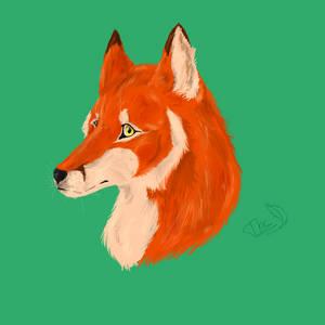 Fox headshot