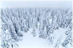 Deep snow forest