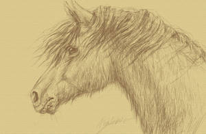 Windchild by horseartaddict