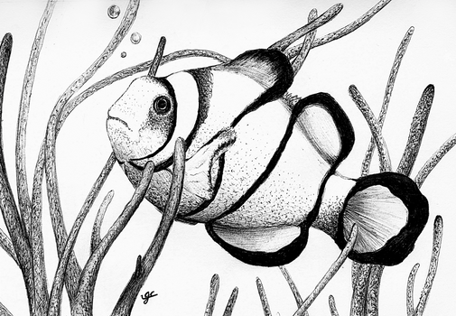 Clown Fish - Ball Point Pen.
