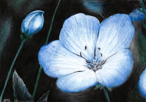 Blue violets - Colored Pencil