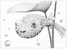 Pencil Puffer Fish - HSH Prize