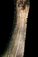 Tree trunk by blumilein