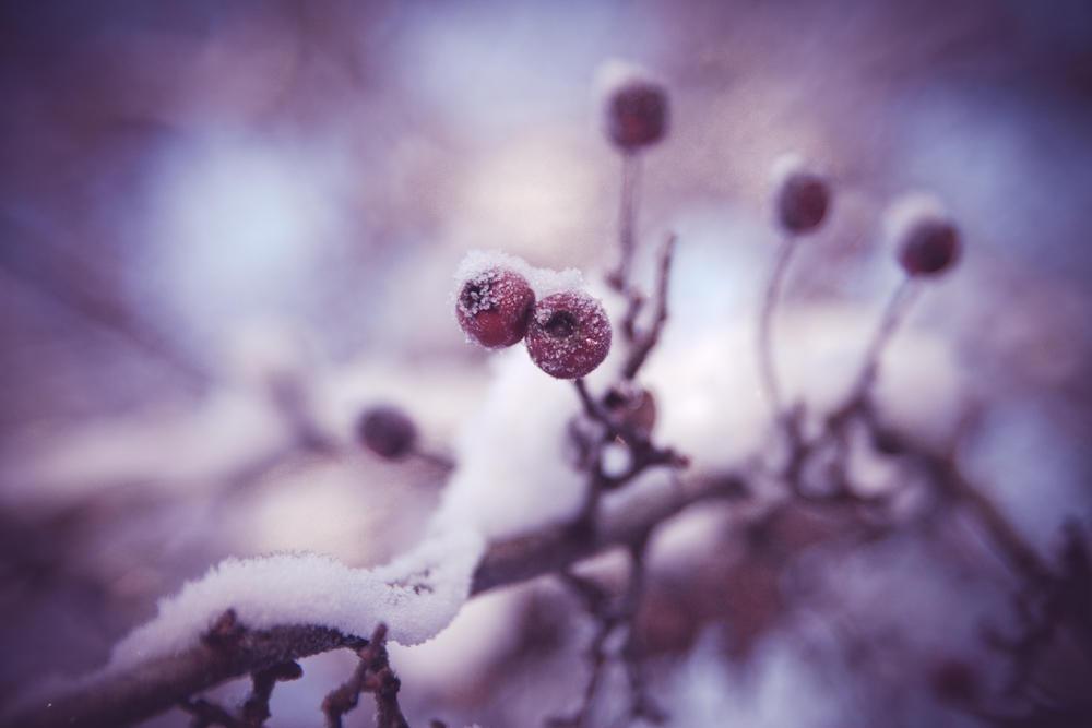 Winter by blumilein