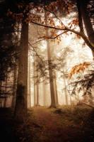 Magic forest by blumilein