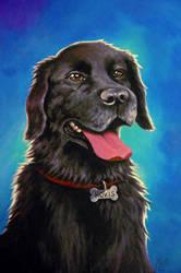 Hovis Portrait
