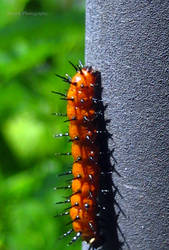 Backyard Critters by Klarenden