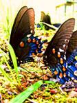 Butterflies by XxXJaPpAnErDieXxX