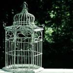 No-Bird Cage