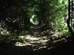 Alice...Come down the rabbit hole