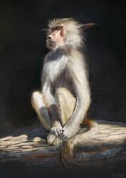 A strange baboon