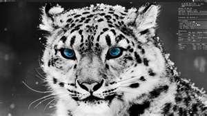 save cat by TmntRockz