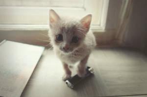 kitty by Foxmim