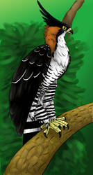 Ornate hawk-eagle by AlexisAthene