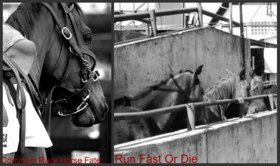 Run Fast, Or Die by 6horsecrazygurl9