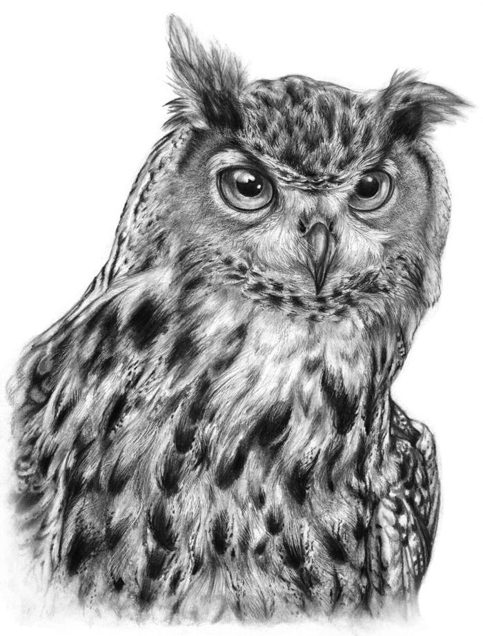 Eagle Owl by crystalw