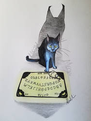 Ouija Cat by Negative-Cation