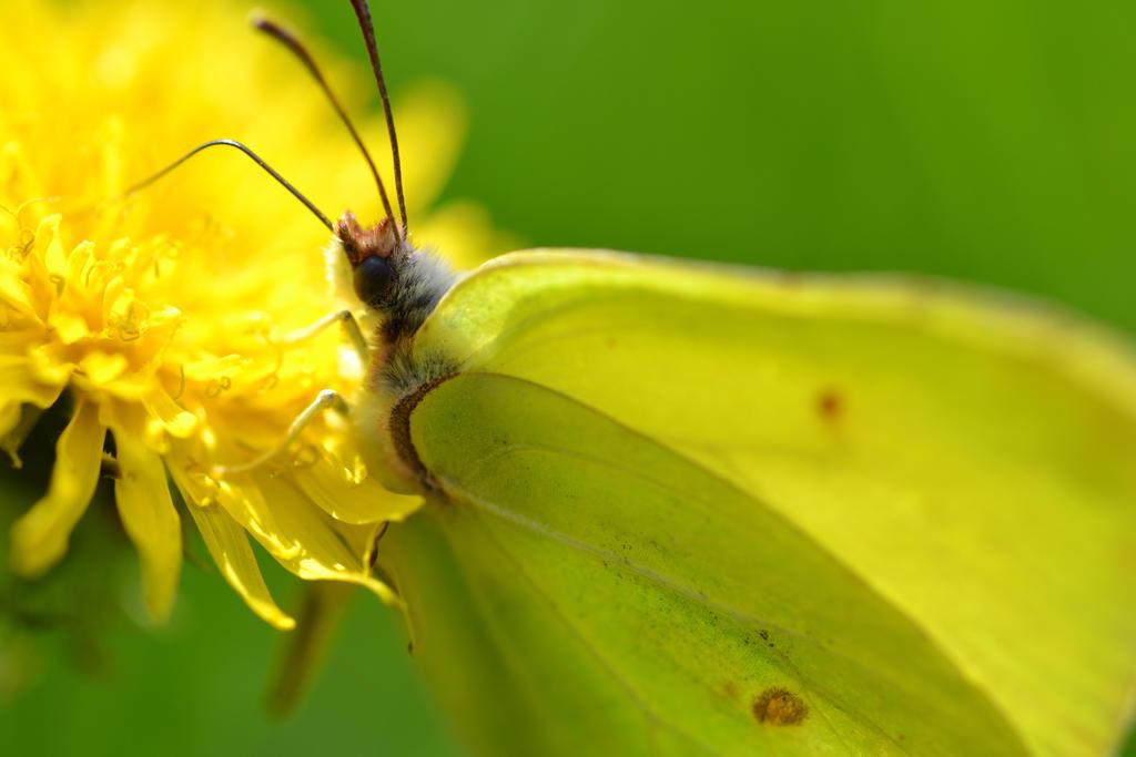 macro of a butterfly #2 by Daywalker18