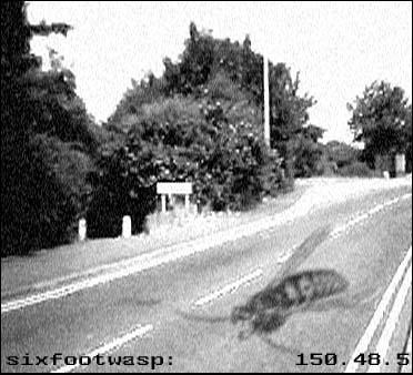 Six foot wasp id v2 by sixfootwasp