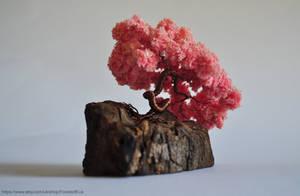 Pink Sakura Bonsai