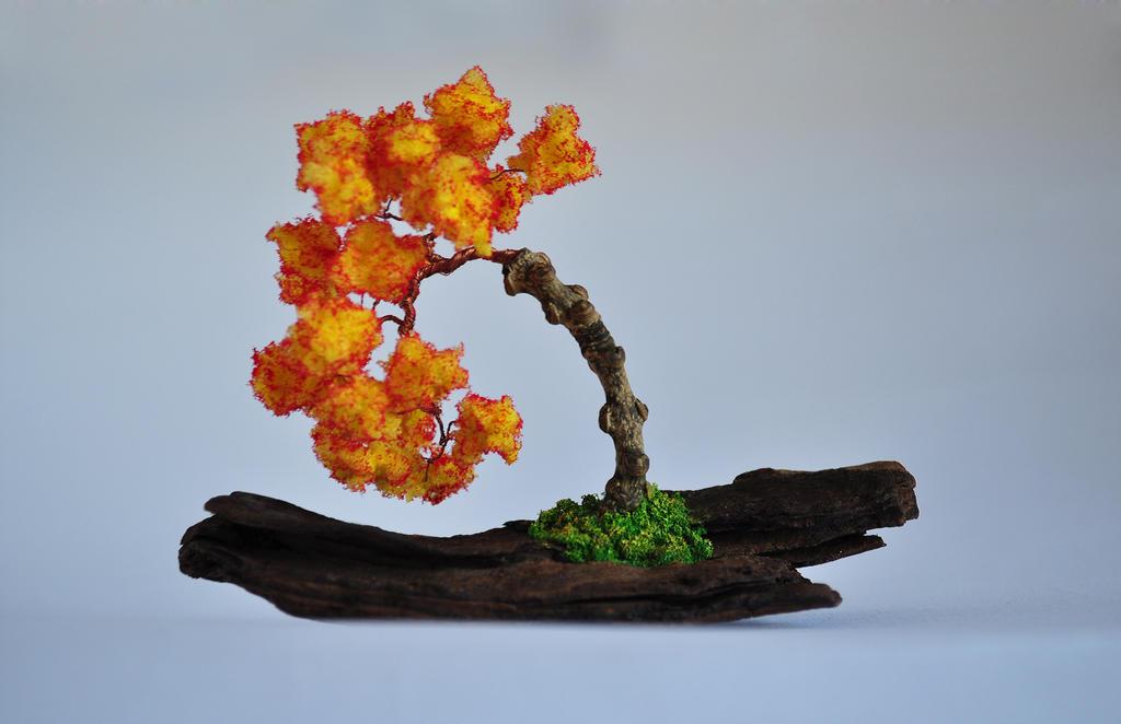 Orange Bonsai Trees Www Imgkid Com The Image Kid Has It