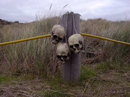 skulls on a post 01 by Treeclimber-Stock