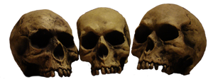 Skulls In A Row - pre-cut png by Treeclimber-Stock