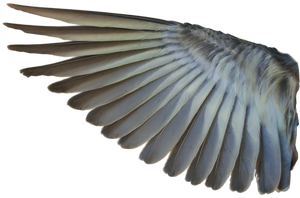 Pine Siskin Inner Wing 01 by Treeclimber-Stock