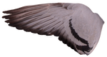 Pigeon Wing 04
