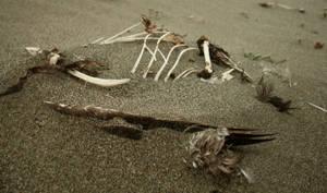 Bird Skeleton 03