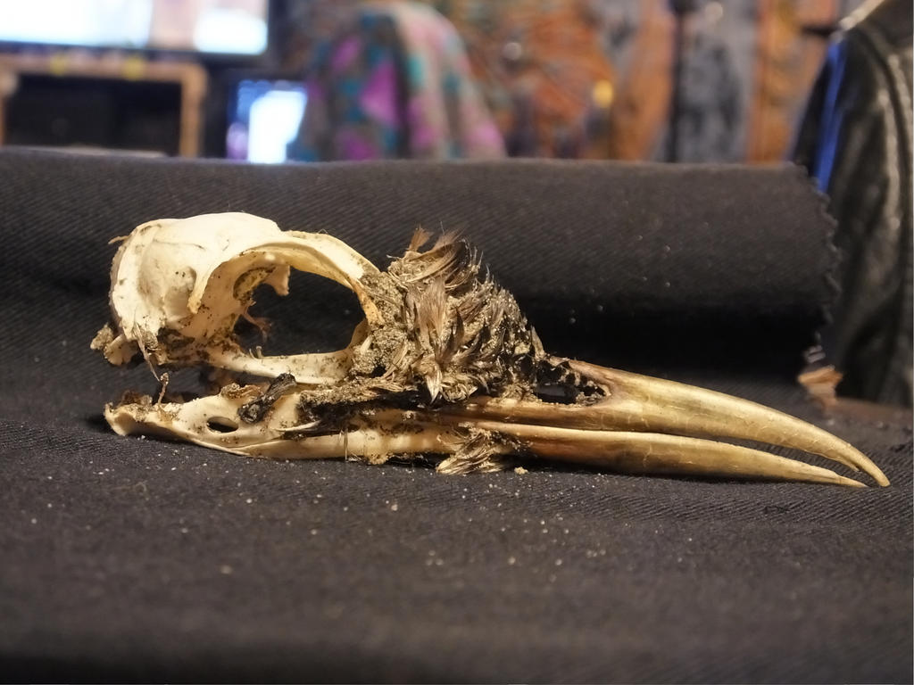 Bird Skull 04 by Treeclimber-Stock