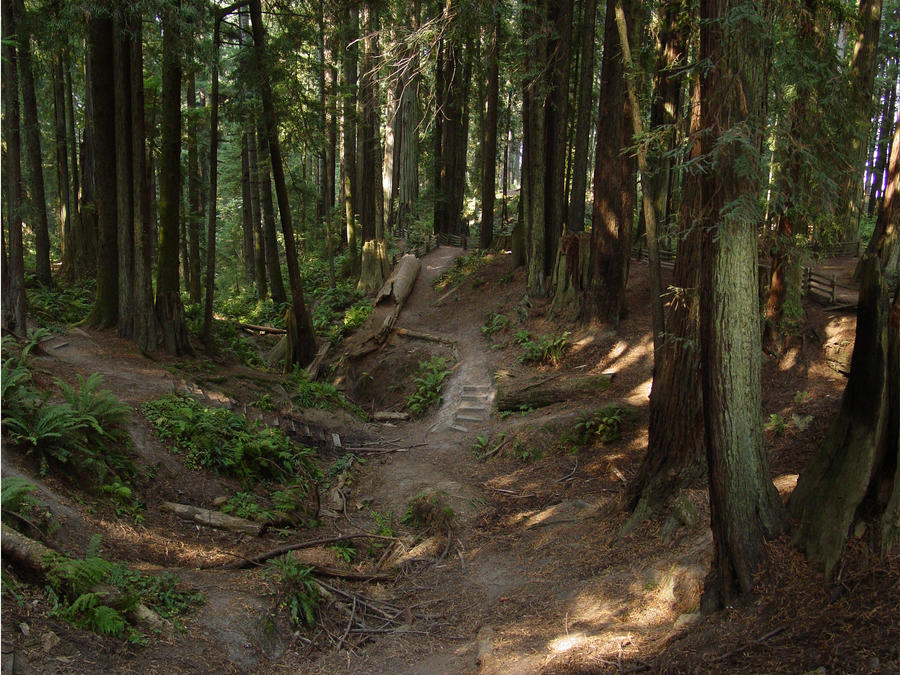 hippie paths by Treeclimber-Stock