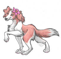 Red Border Collie by StangWolf