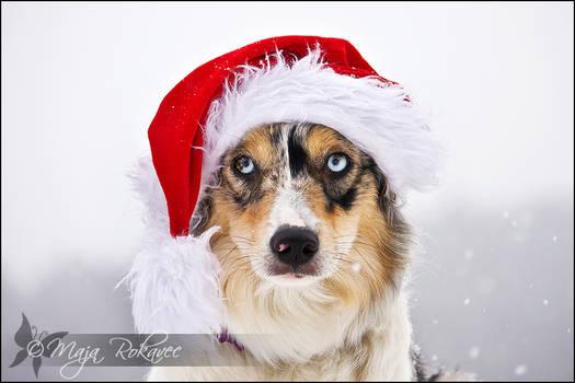 Santa's dog.