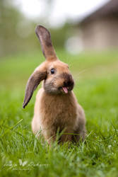 You can call me bunny...