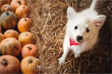 Is it Hallowen yet?