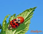 Bug Love..