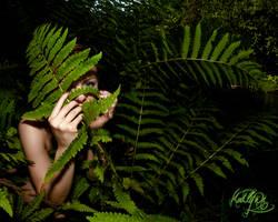 The ferns by madlynx