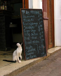 Old Havana cat by madlynx