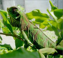 Baby iguana. by Felipe-Coelho2